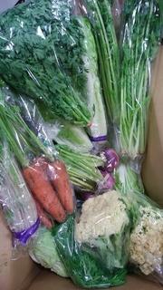 5岩崎さんの野菜.jpg