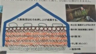 三島独活栽培法 (2).jpg
