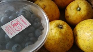 果物ブルーベリー.jpg