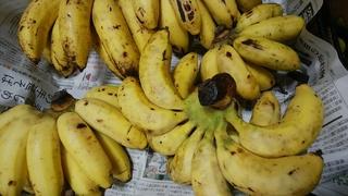 熟して島バナナ.jpg