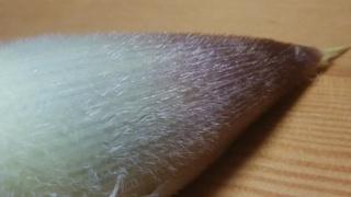 筍の皮.jpg