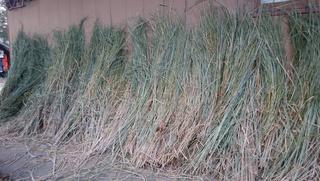 緑米藁.jpg