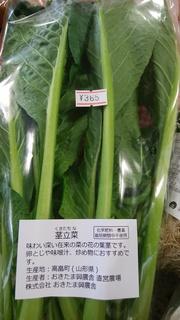 茎立菜.jpg