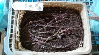 1お米種.jpg