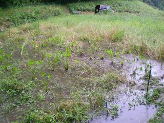 10月、落水した後の淵は湧き水がたまっている。.JPG