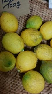 13とびしまレモン.jpg