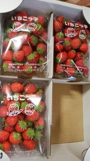 13ミニサイズ苺.jpg