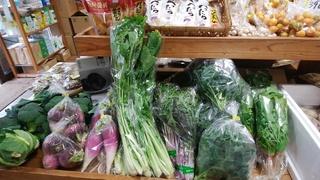 15畑菜.jpg