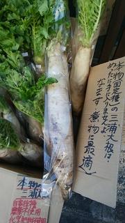 27三浦大根.jpg