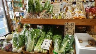 29入荷かつお菜壬生杓子菜.jpg