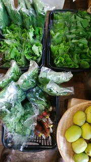 4飯田さん野菜.jpg