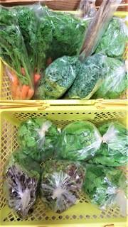 5月27日池松さんの野菜 (2).jpg
