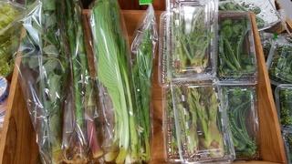 5月4日刈屋山菜.jpg