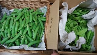 5絹さや久留米豊豌豆.jpg