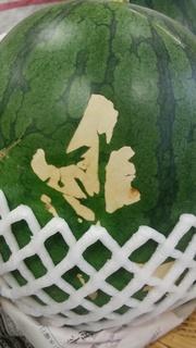 7月1日西瓜の虫の跡.jpg