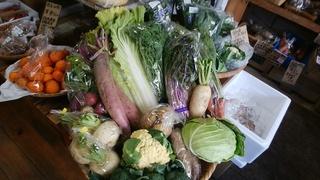 8岩崎さん野菜.jpg