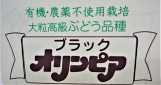 9月13日ブラックオリンピア (2).jpg